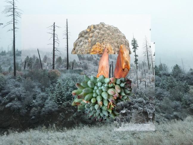 Rachel Forrest pineinforest